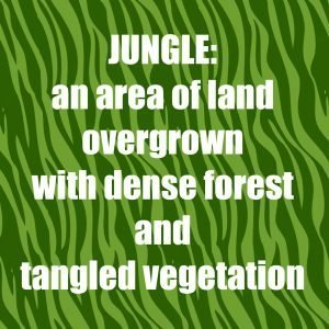 Jungle - definition SNJ